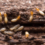 10 best tips for a pest free home
