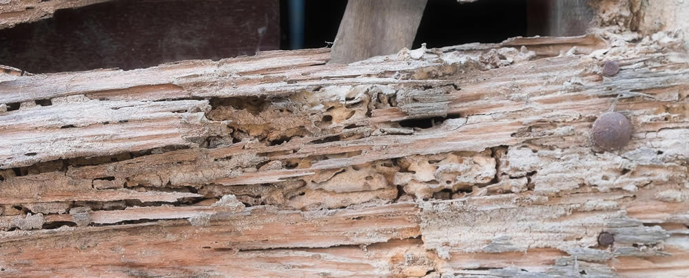 Termite Damage Is Leading Factor