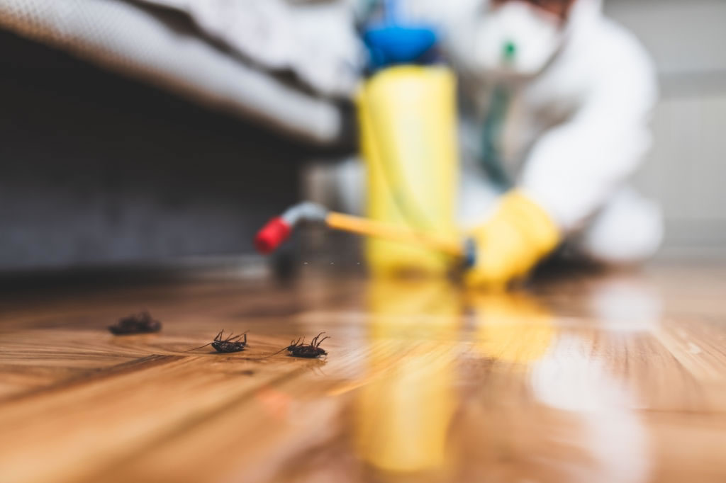Pest Control Tips to Keep Pests Away This Summer